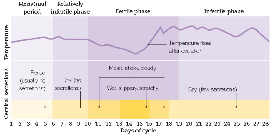 روز 8 بارداری