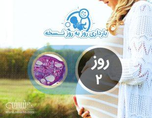 روز دوم بارداری