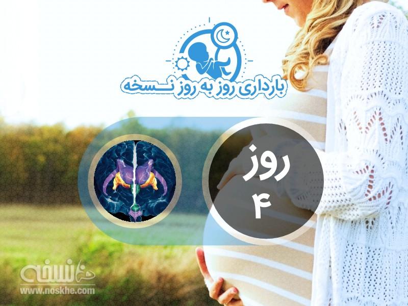 روز چهارم بارداری