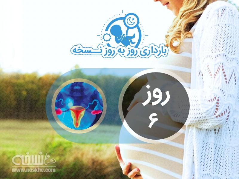 روز ششم بارداری