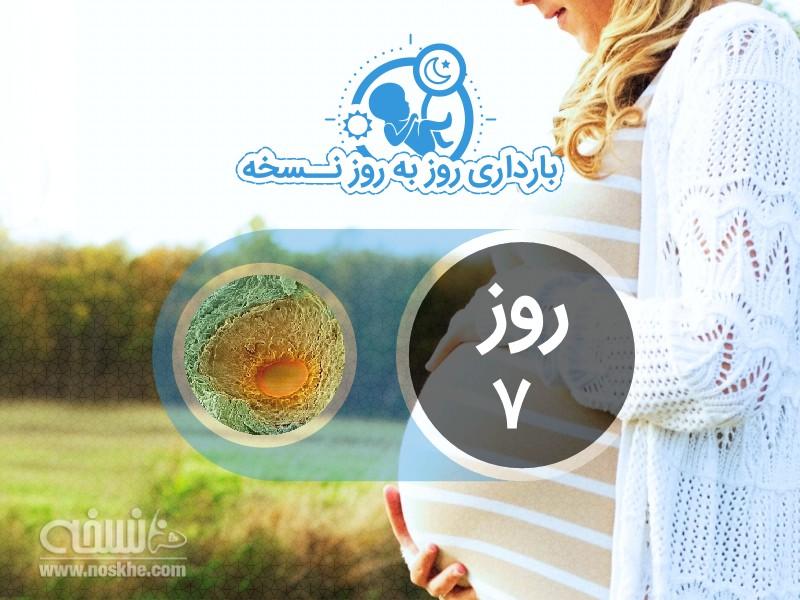 روز هفتم بارداری