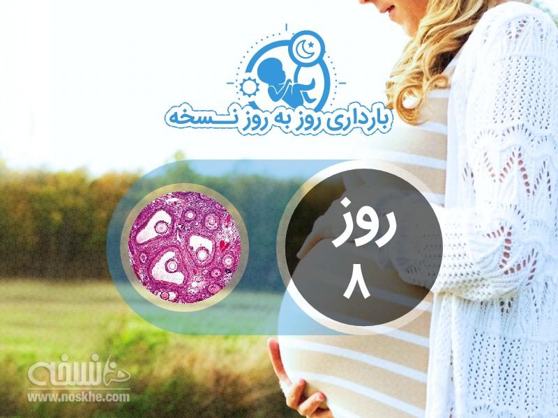 روز هشتم بارداری