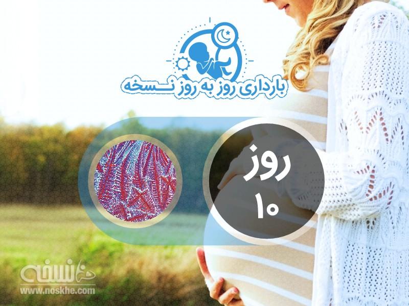 روز دهم بارداری