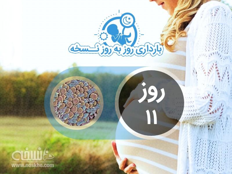 روز یازدهم بارداری