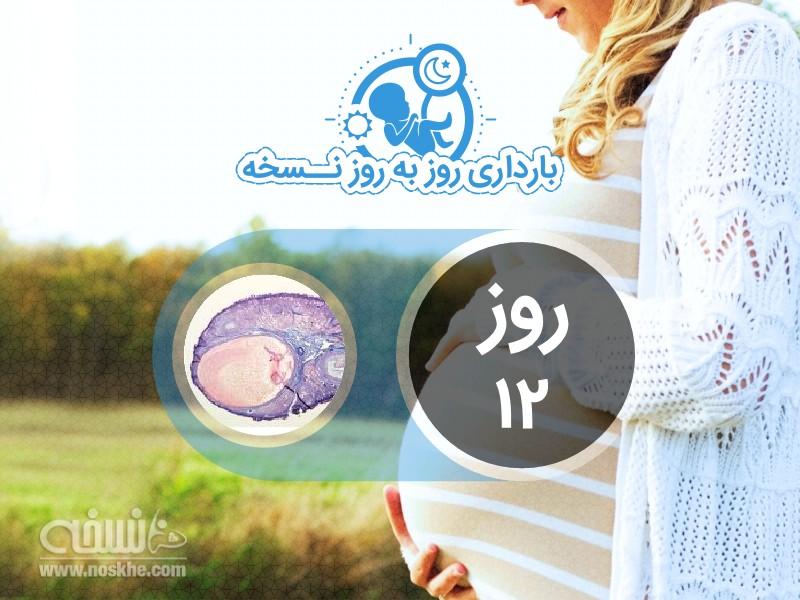 روز دوازدهم بارداری