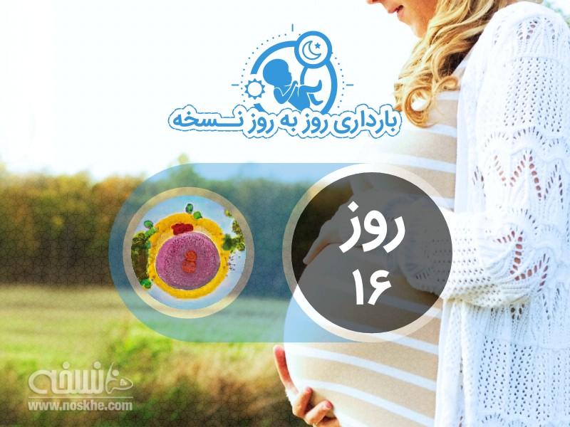 روز شانزدهم بارداری