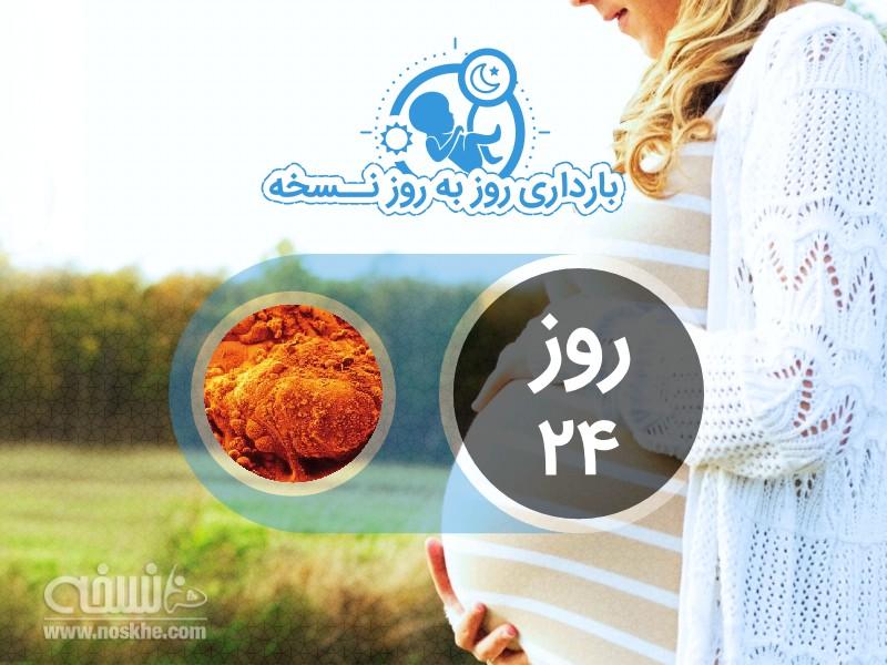 روز بیست و چهارم بارداری