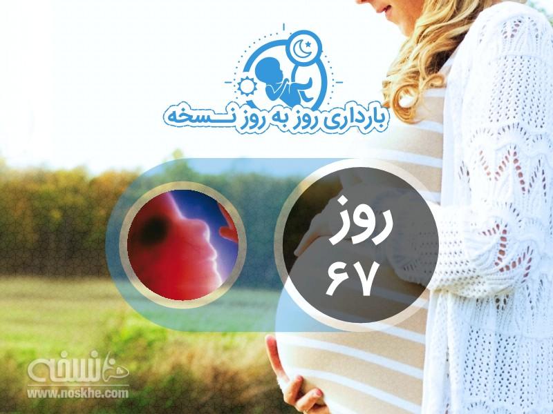 روز شصت و هفتم بارداری