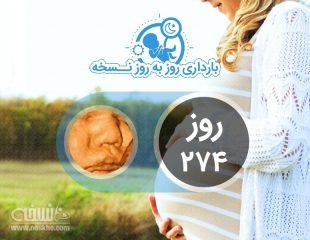 روز دویست و هفتاد و چهارم بارداری