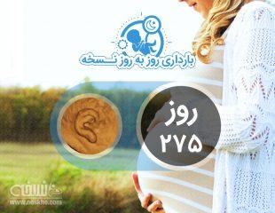 روز دویست و هفتاد و پنجم بارداری