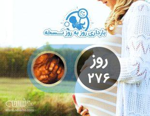 روز دویست و هفتاد و ششم بارداری
