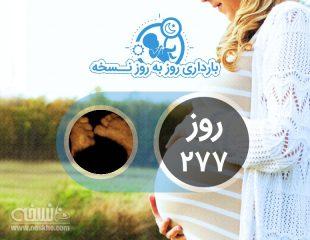 روز دویست و هفتاد و هفتم بارداری