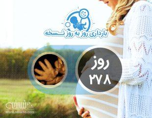روز دویست و هفتاد و هشتم بارداری