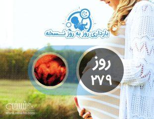 روز دویست و هفتاد و نهم بارداری