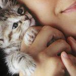 نکاتی در مورد آوردن بچه گربه به خانه و مراقبت از آن