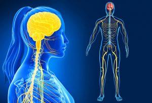 راهنمای تصویری سیستم عصبی