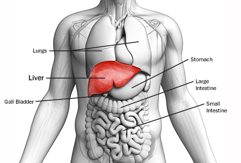 سرطان کبد چگونه رخ می دهد؟