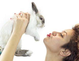 درباره تولارمی یا تب خرگوش چه میدانید؟