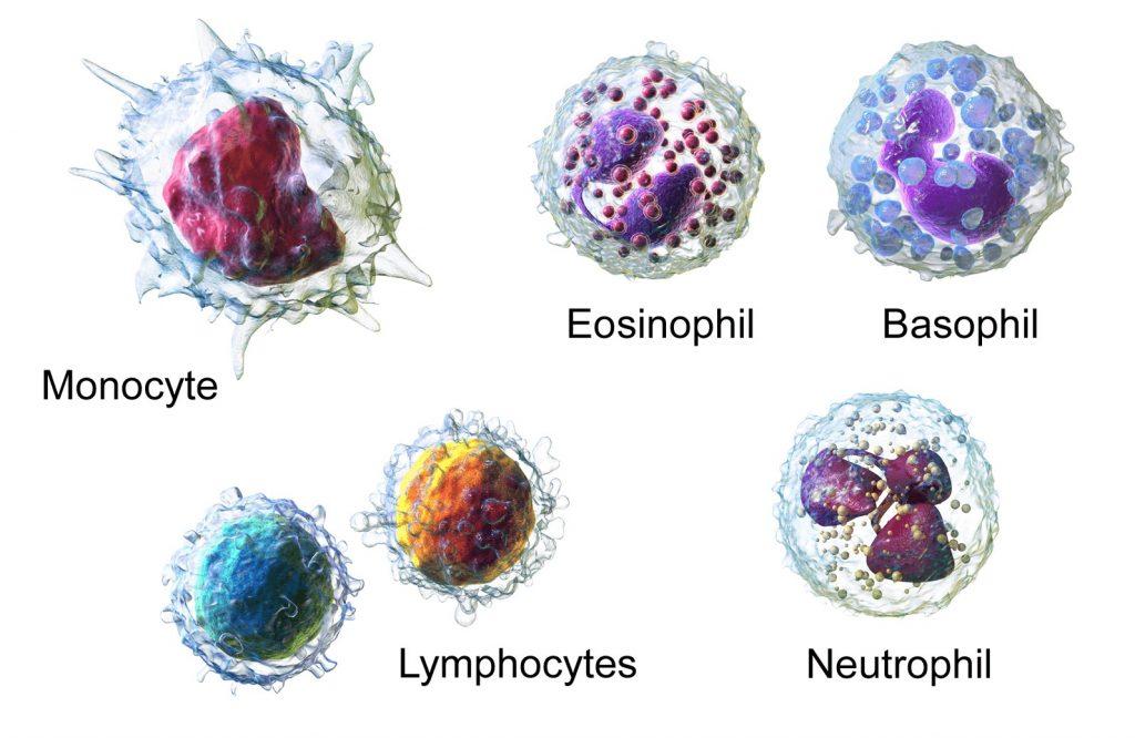 افزایش تعداد گلبولهای سفید خون (لکوسبتوزیس)