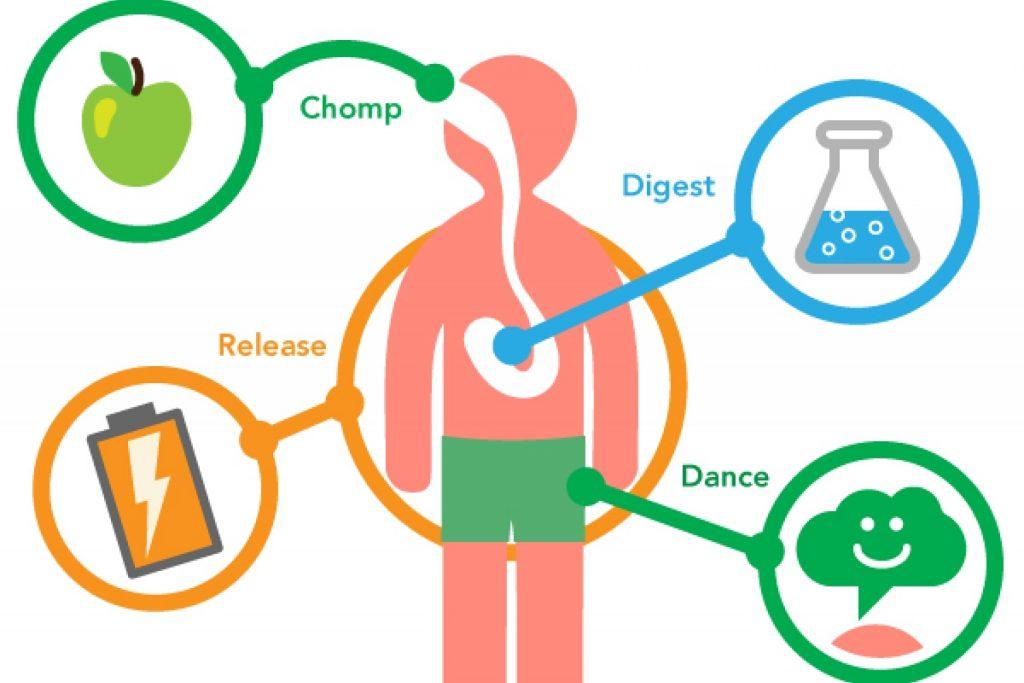 هرچیزی که باید درباره متابولیسم یا سوخت و ساز بدانید