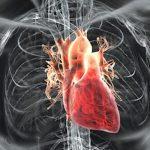 حقایق جالبی درباره قلب که تاکنون نمی دانستید