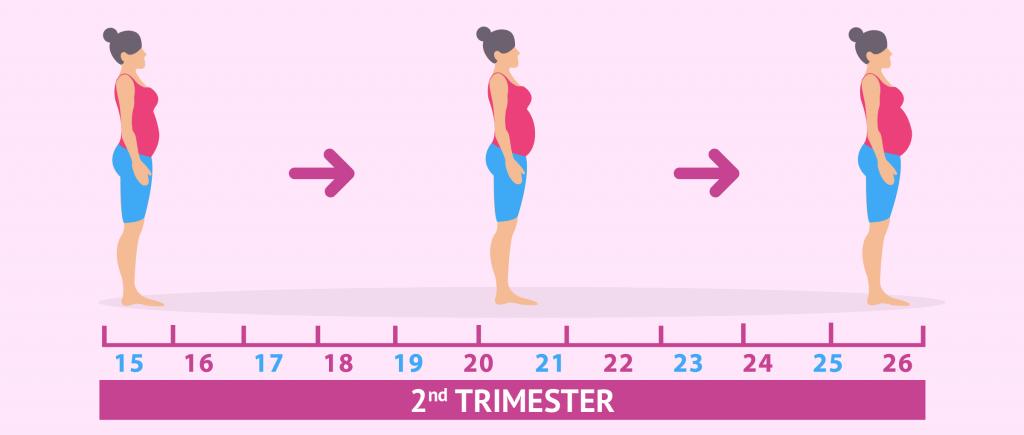 3 ماهه دوم بارداری در یک نگاه (بخش اول)